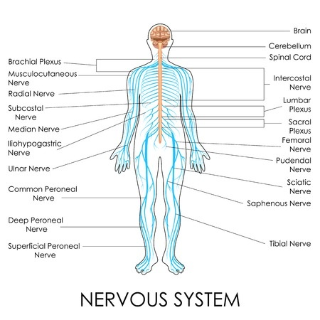 Neuropathy Nervous System