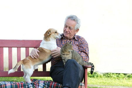 How To Effectively Have A Pet For More Senior Happiness